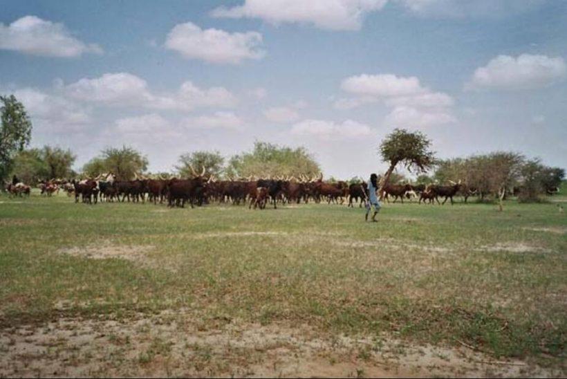 Niger animal husbandry