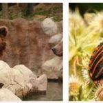 Czech Republic Wildlife and Economy