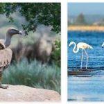 Portugal Wildlife and Economy