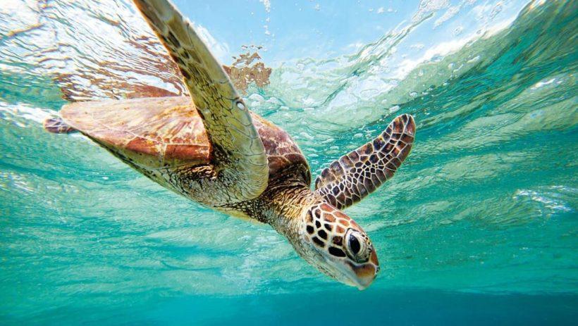 Discover Australia, Fiji and Singapore