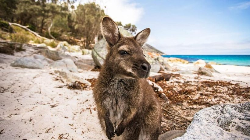 Sydney, Tasmania & Great Ocean Road